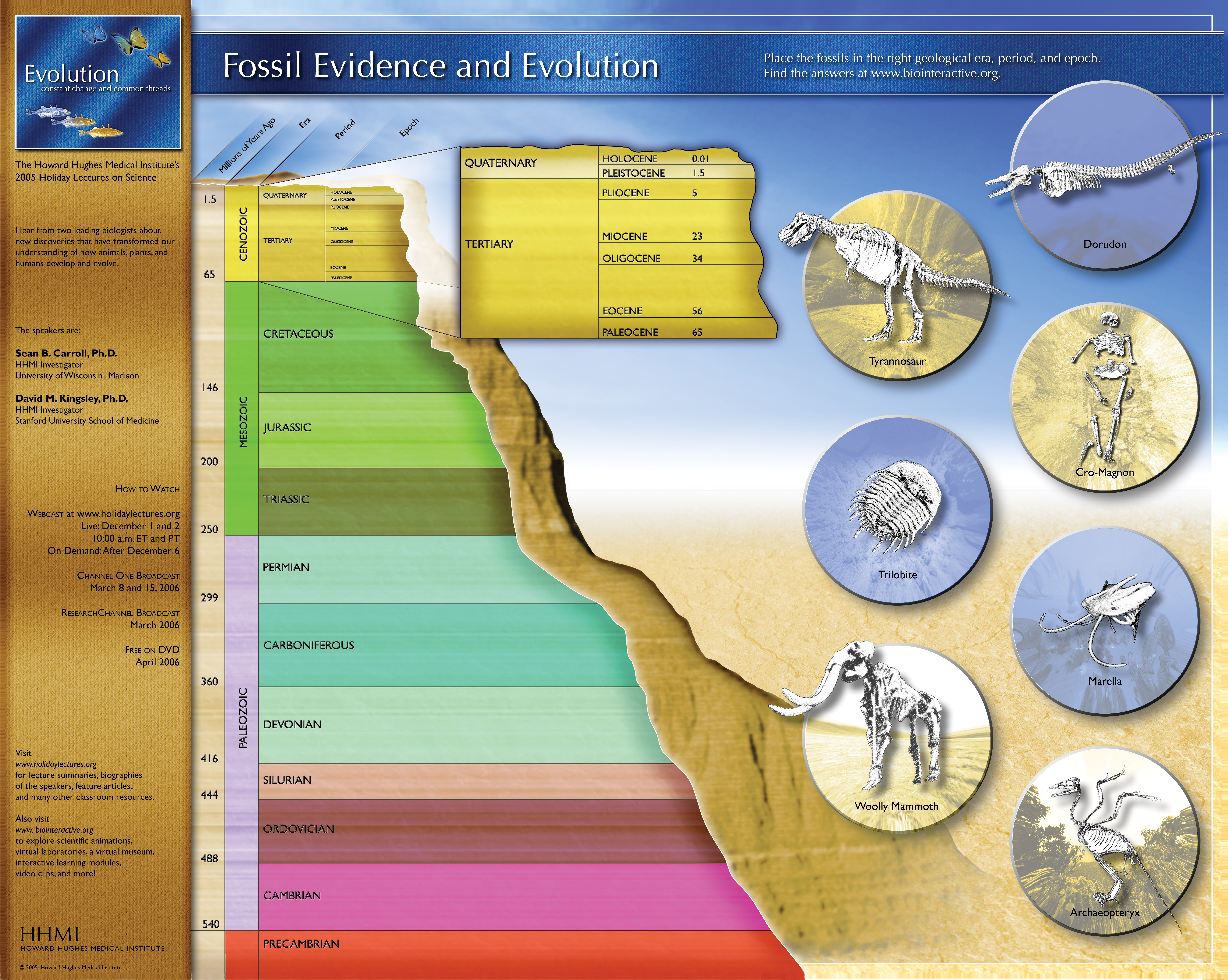 Fossil Evidence and Evolution