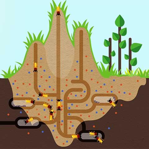 How Termites Enrich Ecosystems