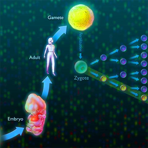 Genetic Mutations and Disease