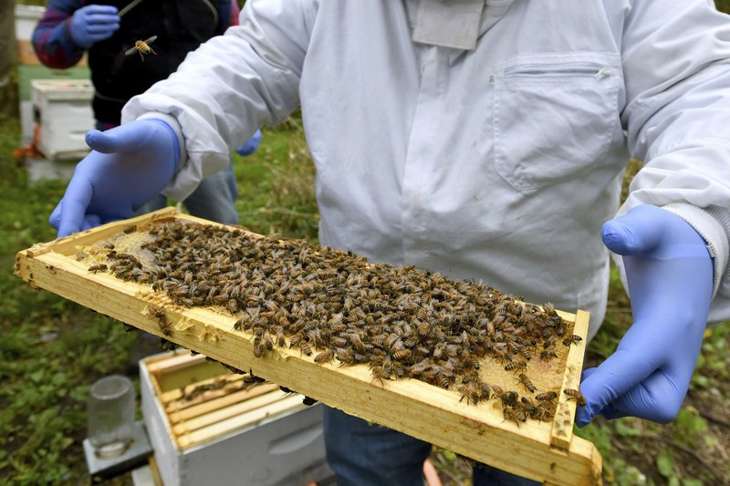 A person holding a wooden frame covered in bees.