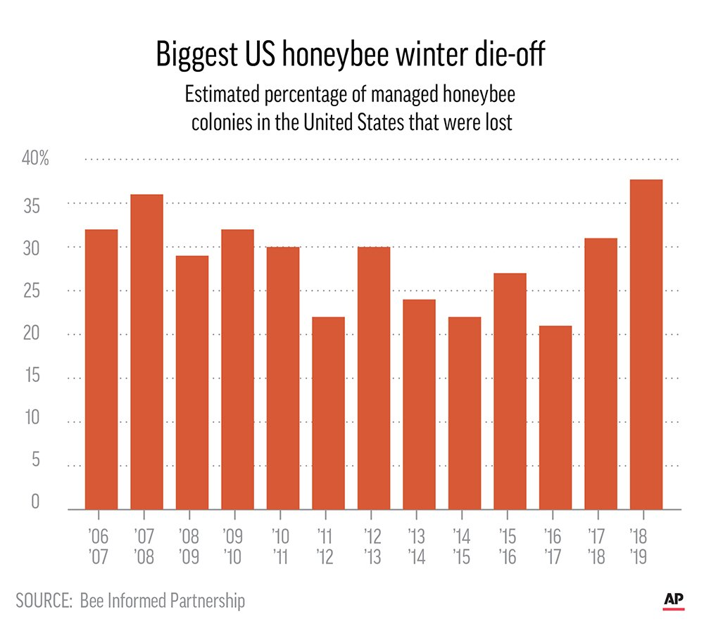 A bar graph titled 'Biggest U.S. honeybee winter die-off. Estimated percentage of managed honeybee colonies in the United States that were lost.' The x-axis shows years ranging from '06/'07 to '18/'19 in increments of one year. The y-axis ranges from 0 to 40 percent in increments of 5 percent. Most of the bars range from 20 to 38 on the y-axis. The last bar, for '18/'19, is the highest shown.