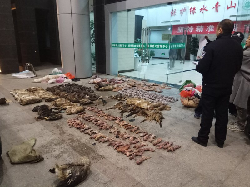 Several people looking at rows of dead animals lying on the ground in front of a building.