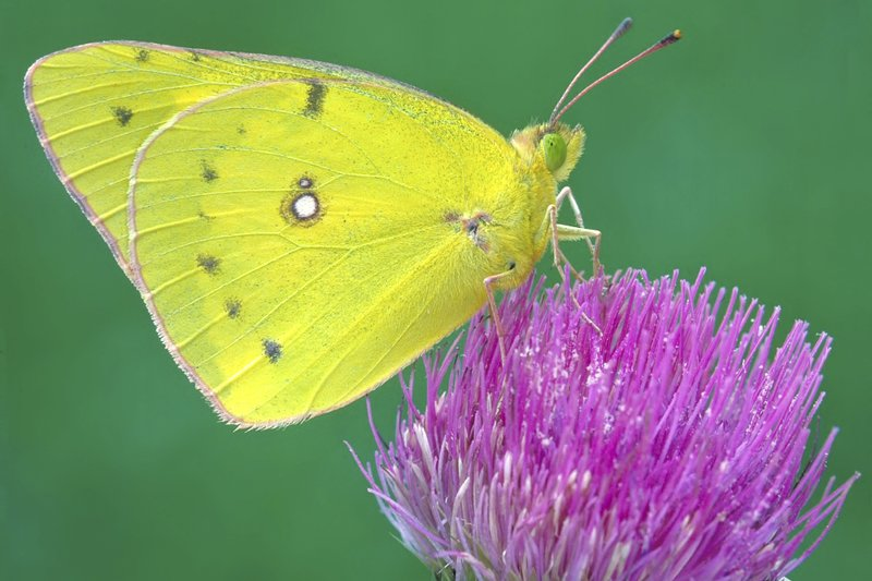 A yellow butterfly perched on a flower.