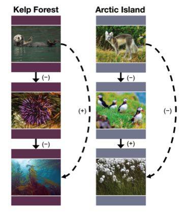 Image of two three-level trophic cascade systems