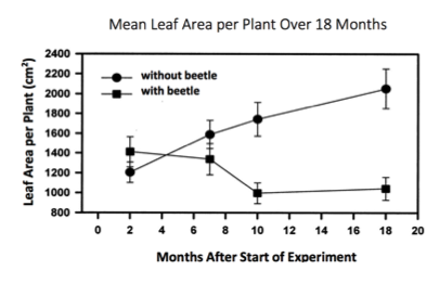 Graph, mean leaf area per plant over 18 months