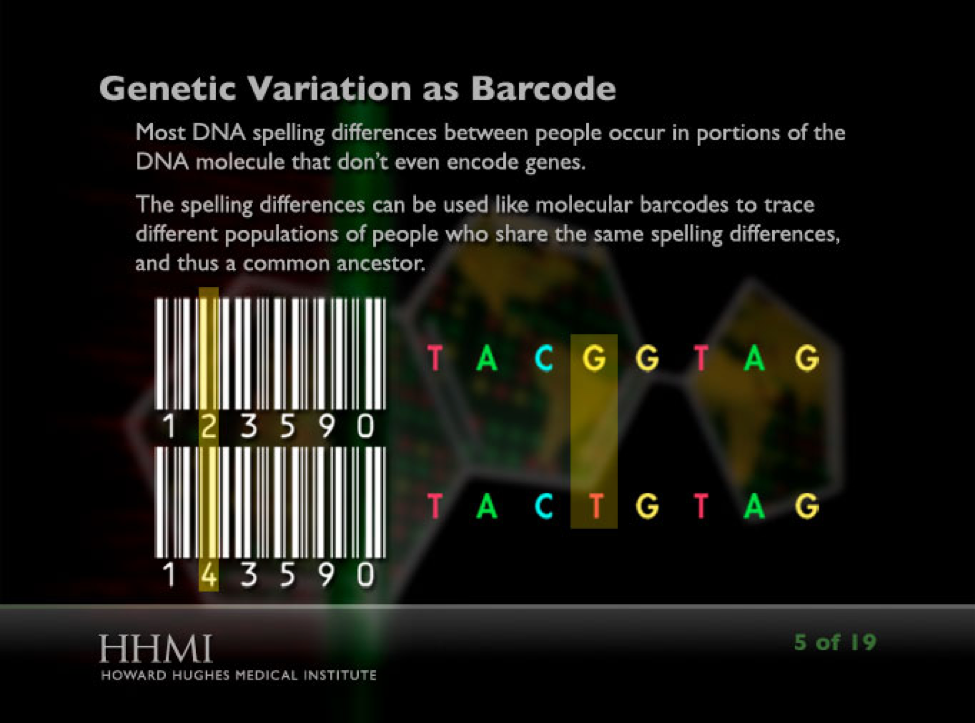 "Screenshot from the interactive showing ""genetic variation as a barcode"""