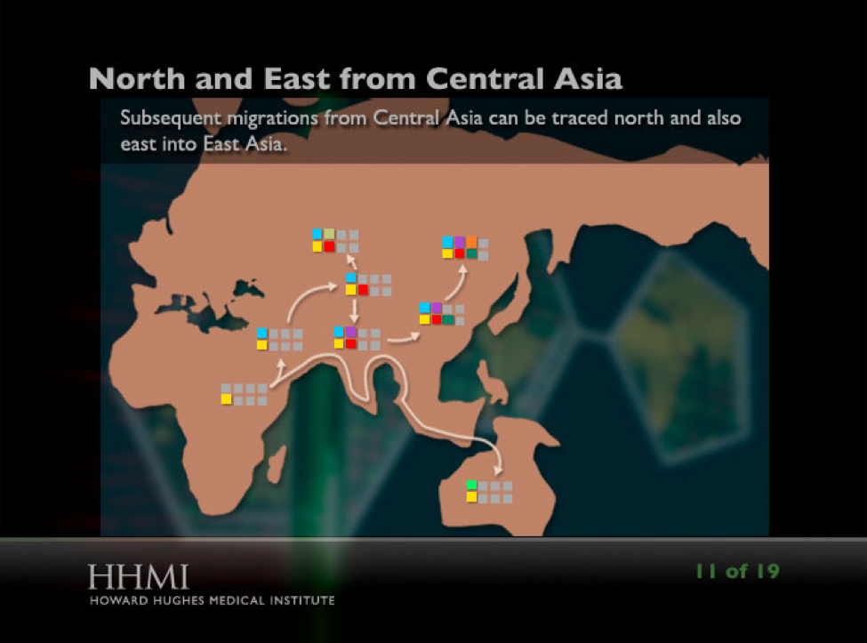 Screenshot from the interactive showing migration patterns of human ancestors
