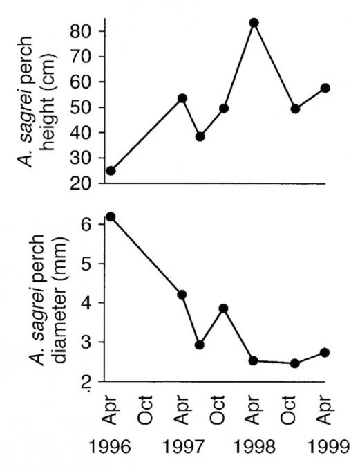 Effects of Predation on the Niche of Lizards