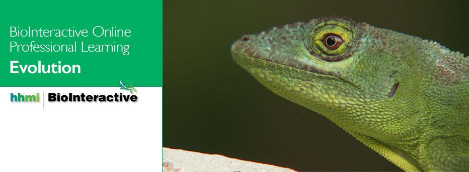 Image of a lizard with text that says BioInteractive Online Professional Learning - Evolution