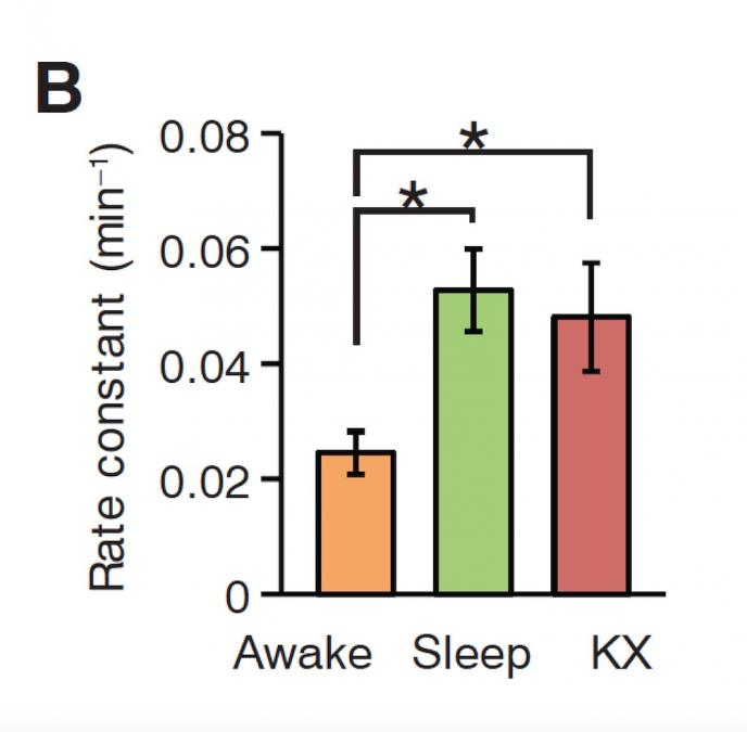 Graph of beta amyloid in awake, asleep, and anesthsized state