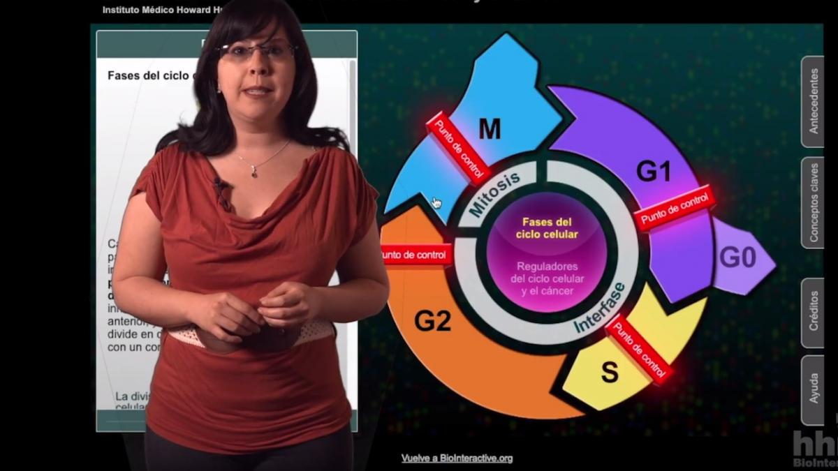 Educator standing in front of a screenshot of the Cell cycle interactive