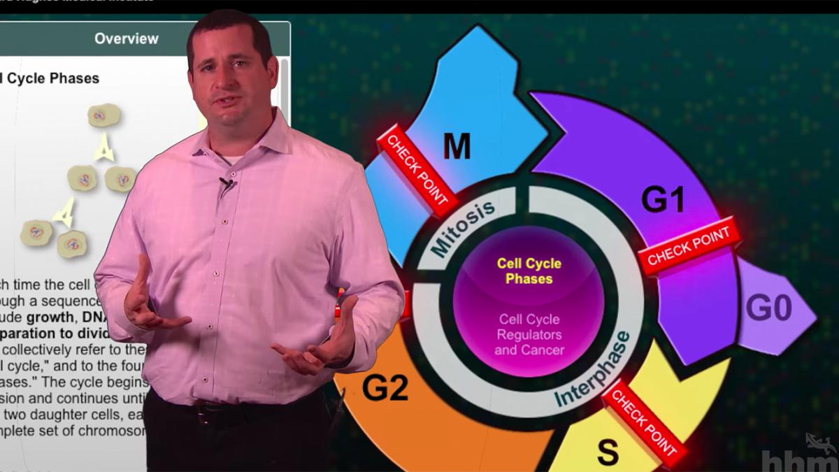Educator standing in front of a cell cycle diagram.