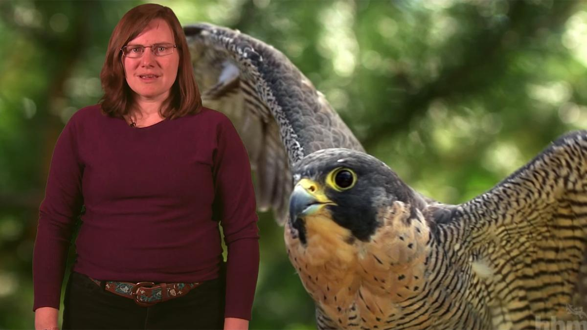 Educator standing in front of a photograph of a falcon.