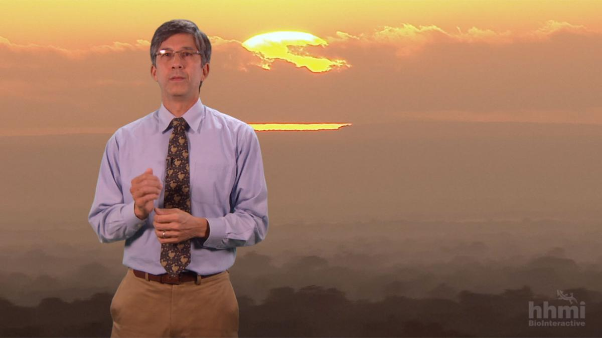 Educator standing in front of a sunset image