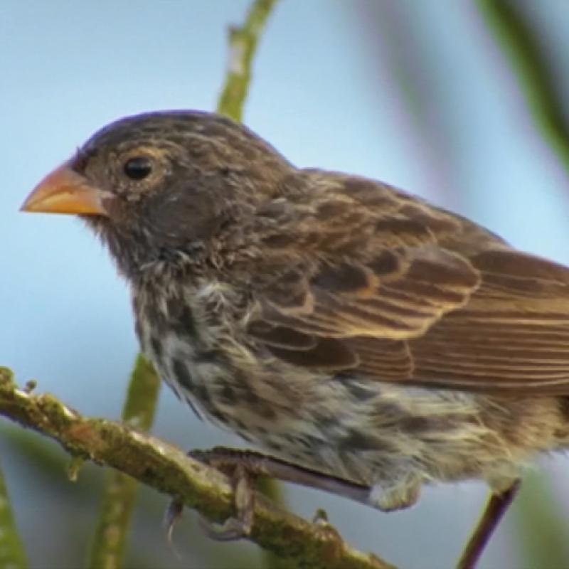 The Origin of Species: The Beak of the Finch