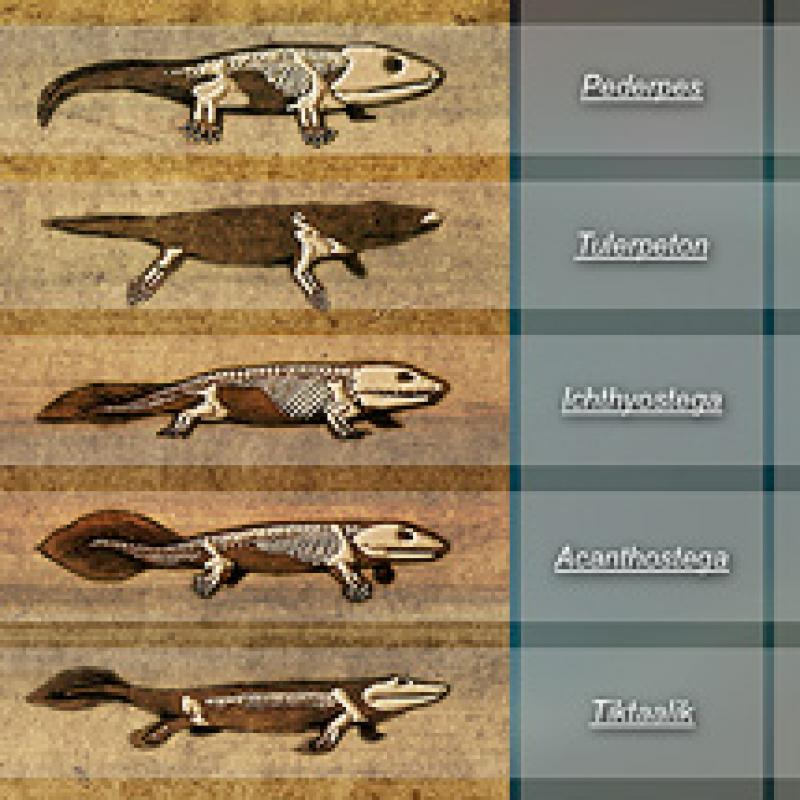 Image from the interactive showing various tetrapods