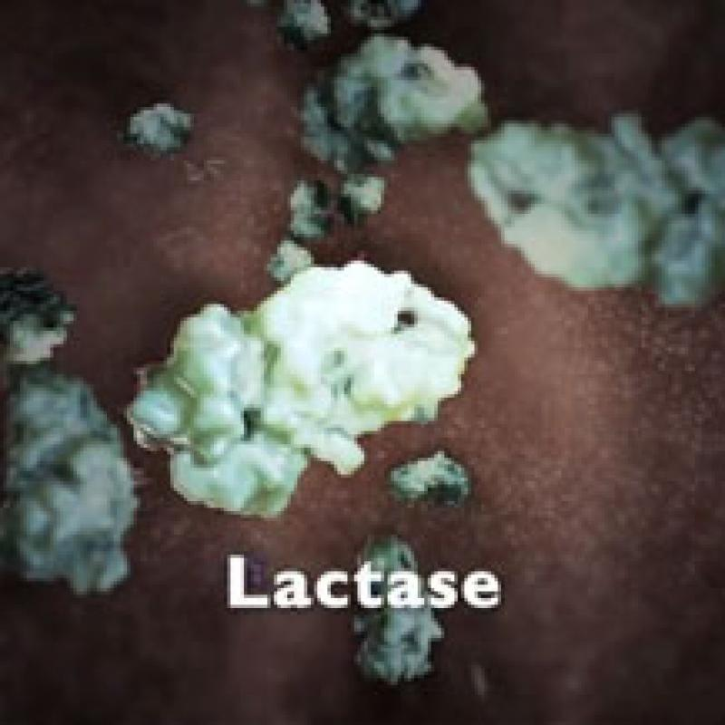 A still from an animation of lactase digesting lactose.