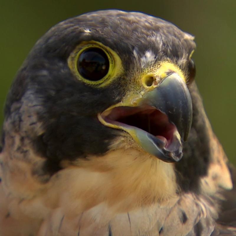 Activity for The Origin of Birds