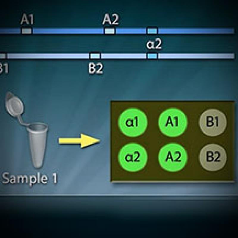 Bacterial Identification Virtual Lab