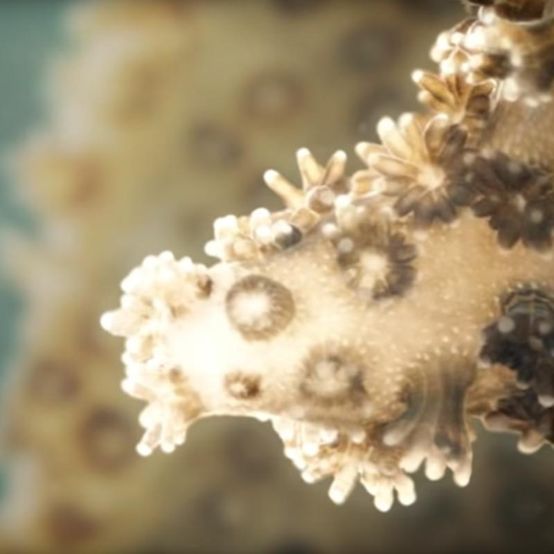 3D animation of a bleached coral