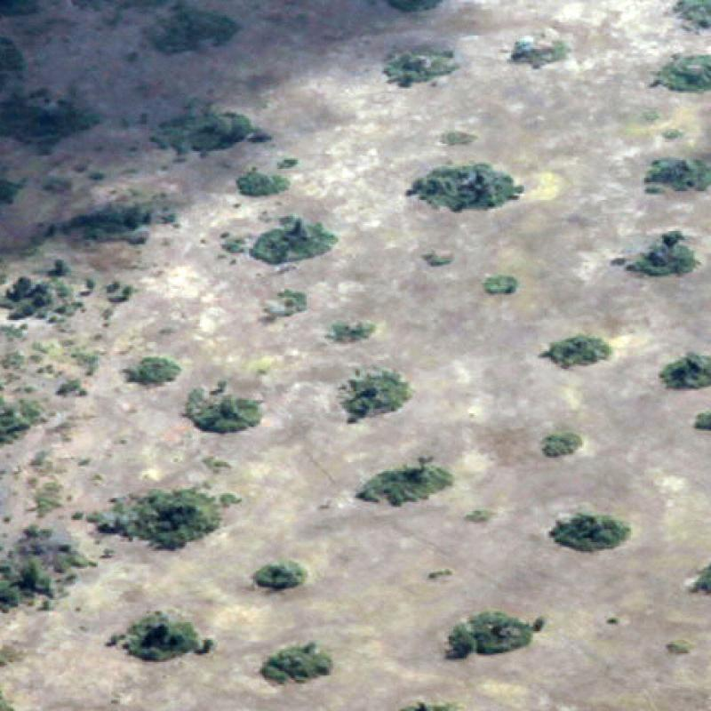 Photo of termite mounds in Mozambique