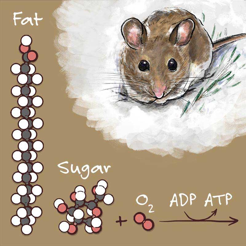 Still from the film showing carbohydrate and fat molecules with illustration of a mouse.