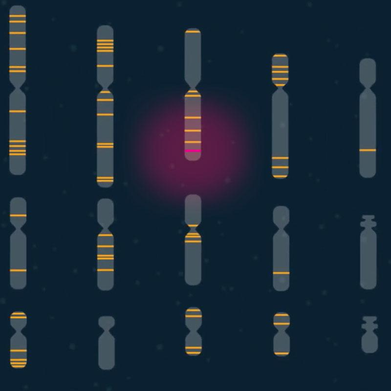 Illustration of chromosomes with bands representing genes