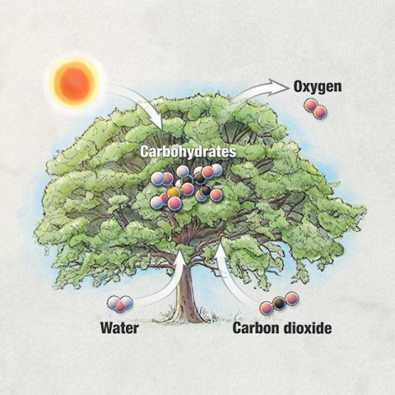 Photosynthesis_thumbnail.jpg